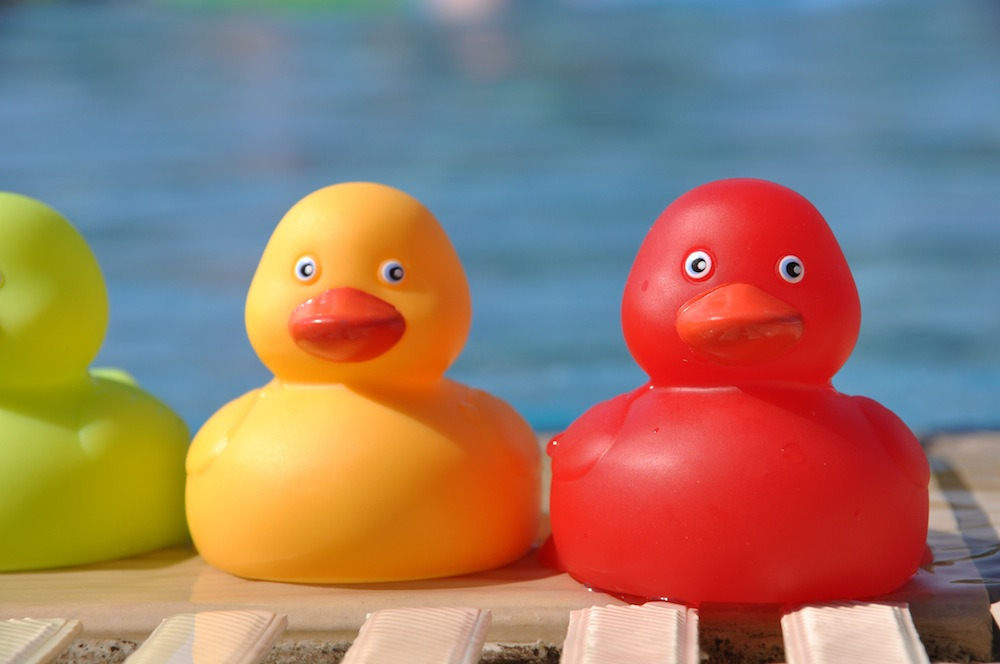 ducks by pool for radio play article