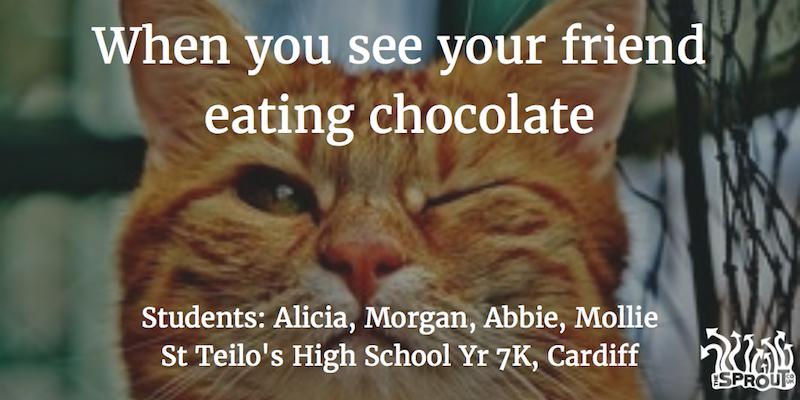 yr7k-winking-cat-meme3